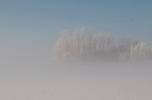 Trees in mist over snow. Photo: Peter van de Lavoir
